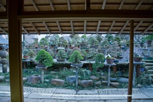 Kunio Kobayashi - Shunkaen Bonsai Museum