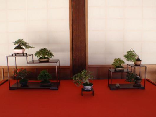 11th Koju-Ten Bonsai Show